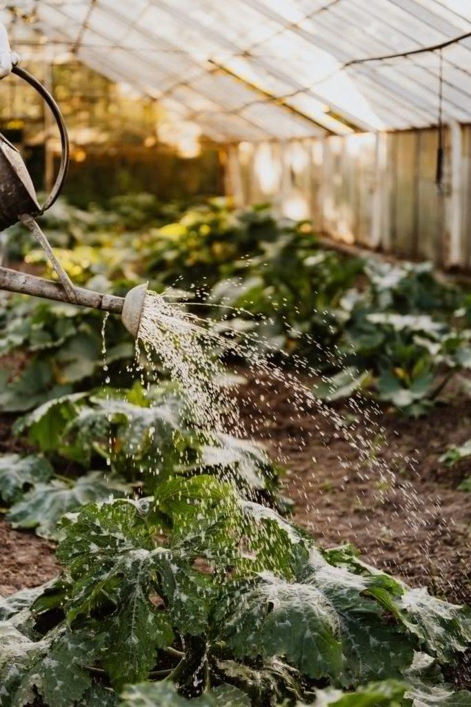 Un jardin entretenu avec une grelinette